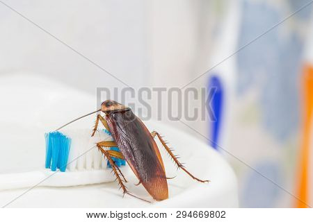 Cockroaches Are On The Toothbrush In The Bathroom, And Cockroaches Also Carry The Germs To Humans In