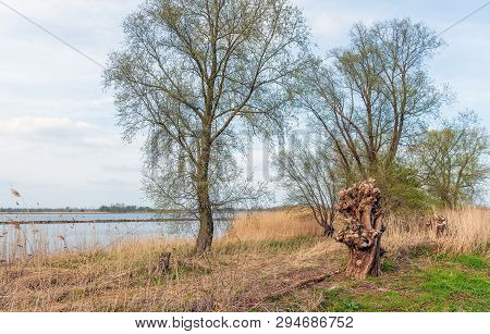 On The Bank Of The Wide Dutch River Amer Near The Village Of Lage Zwaluwe, North Brabant. Spring Beg