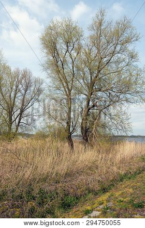 New Soft Green Leaves On The Branches Of The Willow Trees At The Bank Of Wide Dutch River. The Photo