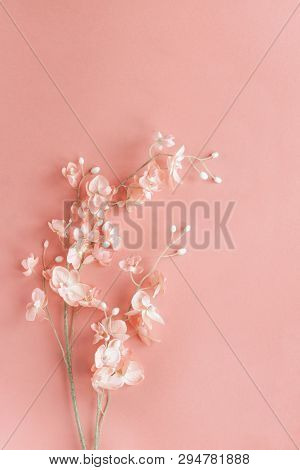 Beautiful Pink Flowers Over A Pink Background With Copy Space For Your Text Top View. Flat Lay.