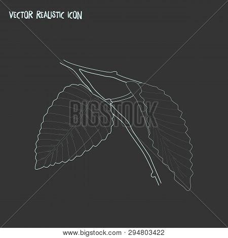 Hornbeam Leaf Icon Line Element. Vector Illustration Of Hornbeam Leaf Icon Line Isolated On Clean Ba