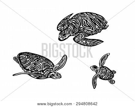 Hand Drawn Tortoise Family Outline Sketch. Vector Black Ink Drawing Turtles Isolated Set On White Ba