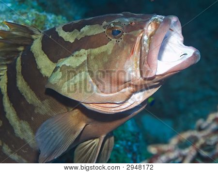 Goby Toothbrush