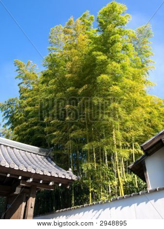 Traditional Bamboo