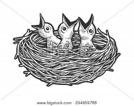Nestling Bird In Nest Sketch Engraving Vector Illustration. Scratch Board Style Imitation. Black And