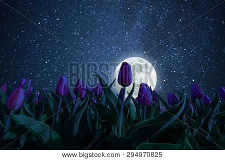 poster of Night landscape with tulips meadow, stars and distant galaxies above. Miky way and moon