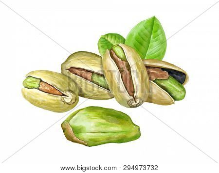 Roasted pistachio nuts and some leaves. Digital watercolor.