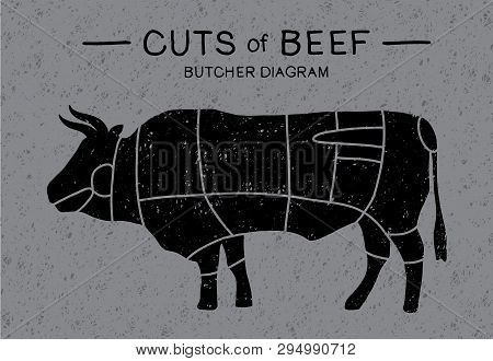 Cut Of Beef. Meat Cuts - Cow. Poster Butcher Diagram And Scheme: Brisket, Shank, Rib, Plate, Flank,