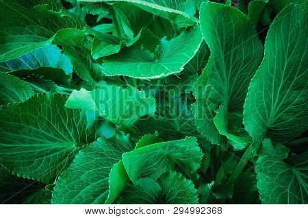 Close Up Full Frame Shot Of Lush Green Leaf Pattern, Growing Outdoors In San Francisco, California