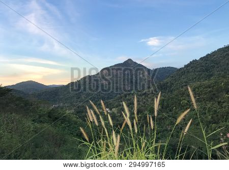 Rice Grass With Sunny Scenery Mountain Hill