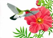 Airbrush drawing of a ruby throated hummingbird poster