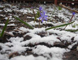 A Little Flower  And Snow