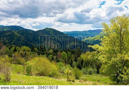 Mountain Countryside In Springtime. Trees On Grassy Rolling Hills. Valley In The Distance Ofthe Scen