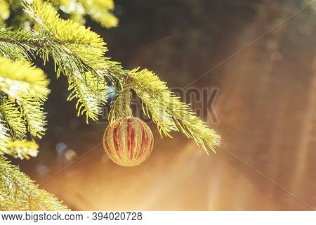 Red Golden Christmas Ball Hanging On A Branch. Decorations On The Christmas Tree. Golden Sunny Light