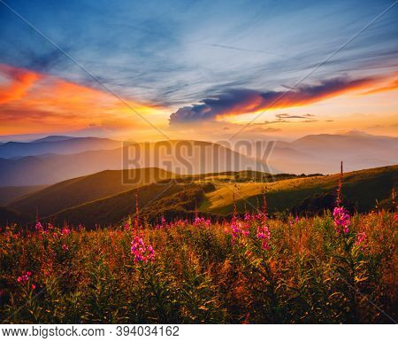 Picturesque evening landscape illuminated by the sunset. Location place of Carpathian mountains, Ukraine, Europe. Image of exotic summer scene. Artistic wallpaper. Discover the beauty of earth.