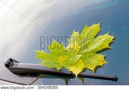 Car windshield with autumn leaves