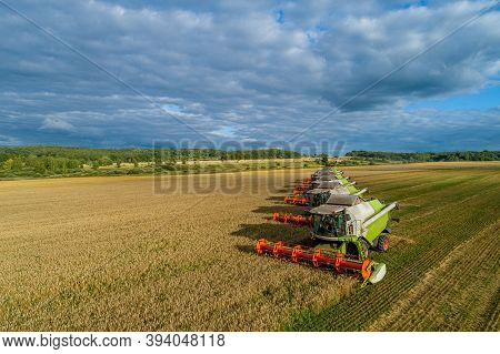 Seven Harvesters Harvest A Field Of Wheat, Autumn, Sunny Day,