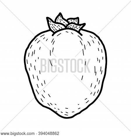Vector Doodle Persimmon. Hand Drawn Persimmon Fruit Illustration Isolated On White Background. Food