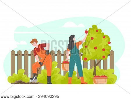 Gardening People Farmers Gathering Harvest, Vector Illustration. Cartoon Characters Couple Working I