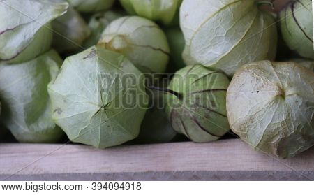 Homegrown Organic Tomatillo, Physalis Philadelphica. They Are Growing In A Vegetable Garden. They Ar