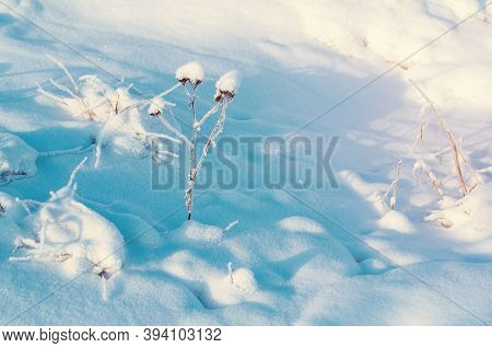 Winter landscape, winter field plants covered with ice and frost on the snowy field. Winter natural meadow scene, winter field nature, winter sunset landscape
