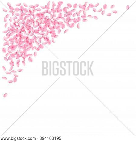 Sakura Petals Falling Down. Romantic Pink Silky Small Flowers. Thick Flying Cherry Petals. Top Left