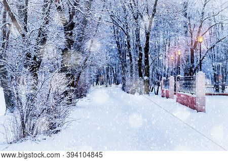 Winter Christmas evening landscape with falling winter snowflakes - winter alley covered with snow among frosty winter trees and shining lights during winter snowfall. Winter Christmas landscape, winter Christmas street