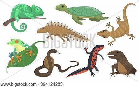 Reptiles And Amphibians Set. Turtle, Lizard, Triton, Gecko Isolated On Shite Background. Vector Illu