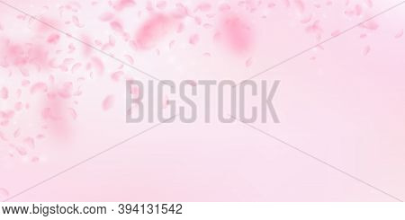 Sakura Petals Falling Down. Romantic Pink Flowers Falling Rain. Flying Petals On Pink Wide Backgroun