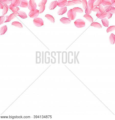 Sakura Petals Falling Down. Romantic Pink Bright Big Flowers. Thick Flying Cherry Petals. Square Top