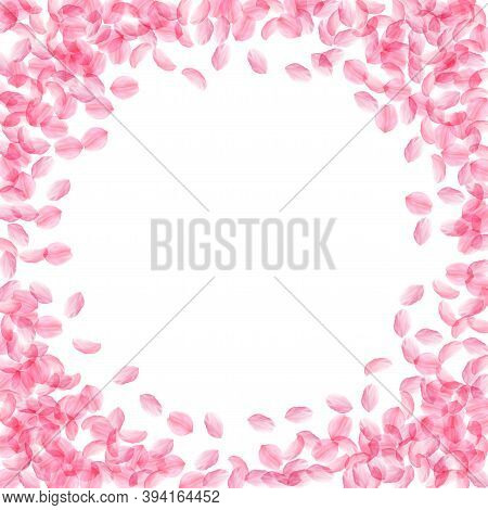 Sakura Petals Falling Down. Romantic Pink Silky Medium Flowers. Thick Flying Cherry Petals. Circle F