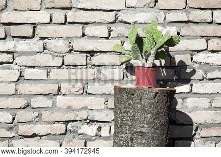 Green Cactus In Flowerpot On Old Brick Wall Background.