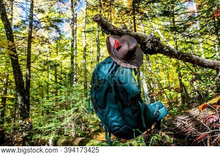 Backpack with hat  hanging in forest