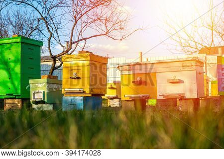 Colorful Wooden And Plastic Hives Against Blue Sky In Summer. Apiary Standing In Yard On Grass. Cold