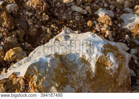 Imprint Of A Fossil Shell (gastropod) In A Carboniferous Limestone Rock