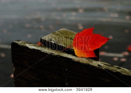 Redleaf On Wood