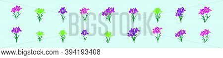Set Of Iris Flower. Cartoon Icon Design Template With Various Models. Modern Vector Illustration Iso