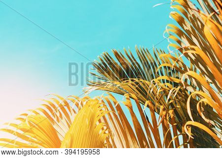 Tropical Palm Tree With Sun Light On Sunset Sky And Cloud Abstract Background. Summer Vacation And N
