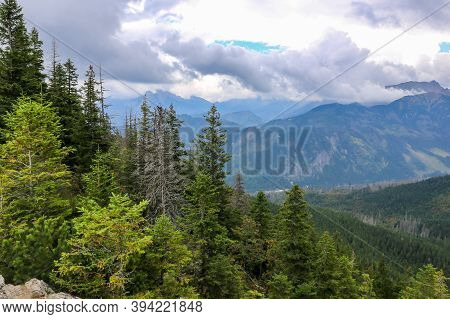 Coniferous Forest With Pine Trees And Spruces On Gesia Szyja Mount In Tatra Mountains, With Tatra Mo