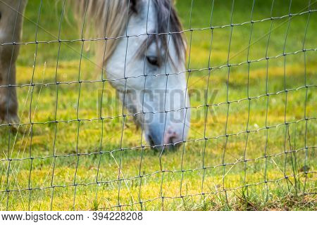 Wire Fence With Blurry Horse Behind Grazing