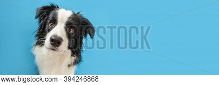 Funny Studio Portrait Of Cute Smiling Puppy Dog Border Collie Isolated On Blue Background. New Lovel