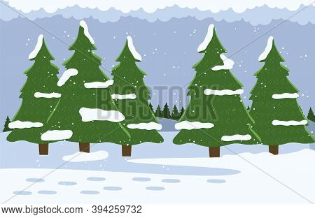 Evergreen Trees, Spruce, Pine With Snowy Tops. Coniferous Trees In Winter Forest. Winter Time, Snowy