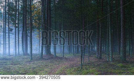 Dark Misty Forest With White Fog, Dreamy View