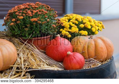 Autumn Decor With Natural Straw Bale, Pumpkins, Flowers And Old Wooden Barrels. Harvest And Garden O