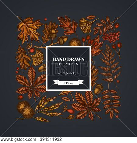 Square Design On Dark Background With Fern, Dog Rose, Rowan, Ginkgo, Maple, Oak, Horse Chestnut, Che