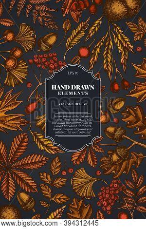 Card Design On Dark Background With Fern, Dog Rose, Rowan, Ginkgo, Maple, Oak, Horse Chestnut, Chest