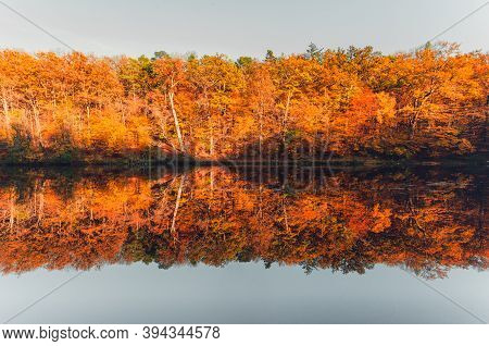 Autumn Forest Lake Reflection In Water Landscape. Fall Lake Reflection. Autumn Scene With Colorfull