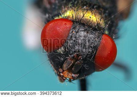 Close up shot of house fly eyes