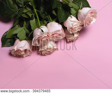 Romantic Floral Valentines Day Background. Pink Roses On Pink Backdrop. Flat Lay, Copy Space.