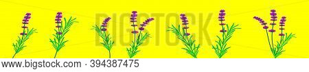 Set Of Lavender Flowers. Cartoon Icon Design Template With Various Models. Modern Vector Illustratio